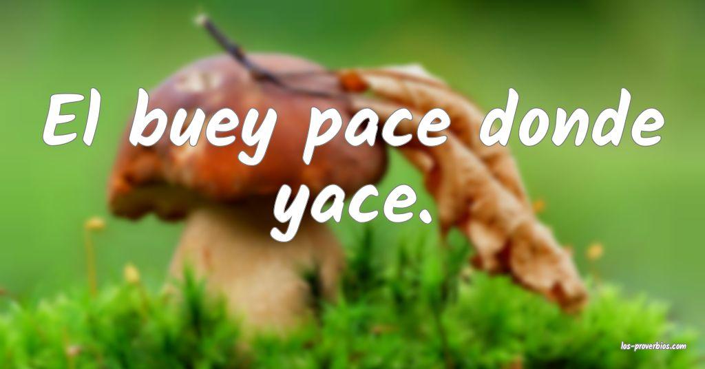 El buey pace donde yace.
