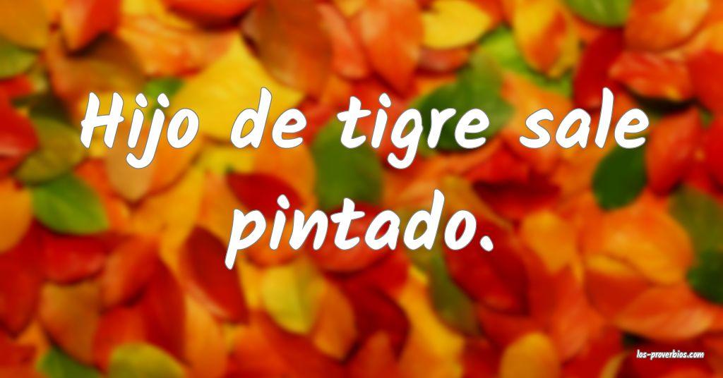 Hijo De Tigre Tigrillo