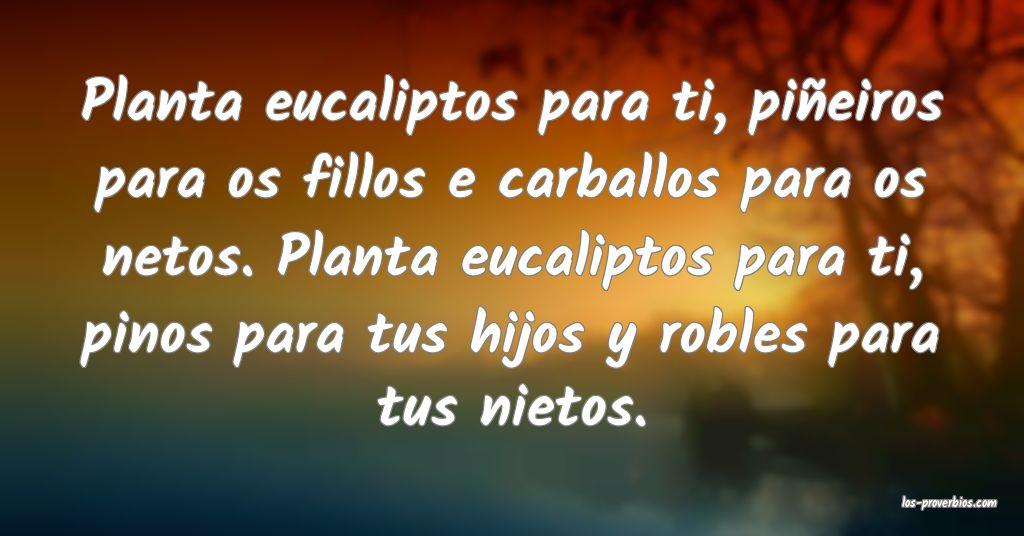 Planta eucaliptos para ti, piñeiros para os fillos e carballos para os netos. Planta eucaliptos para ti, pinos para tus hijos y robles para tus nietos.
