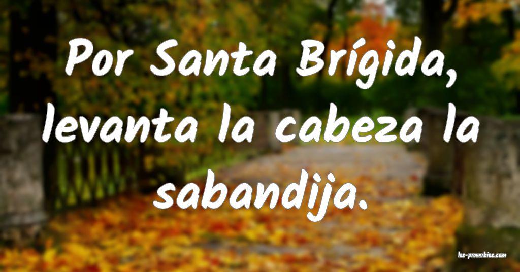Por Santa Brígida, levanta la cabeza la sabandija.
